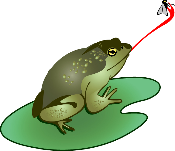 Bullfrog clipart Catching Frog A Art Fly