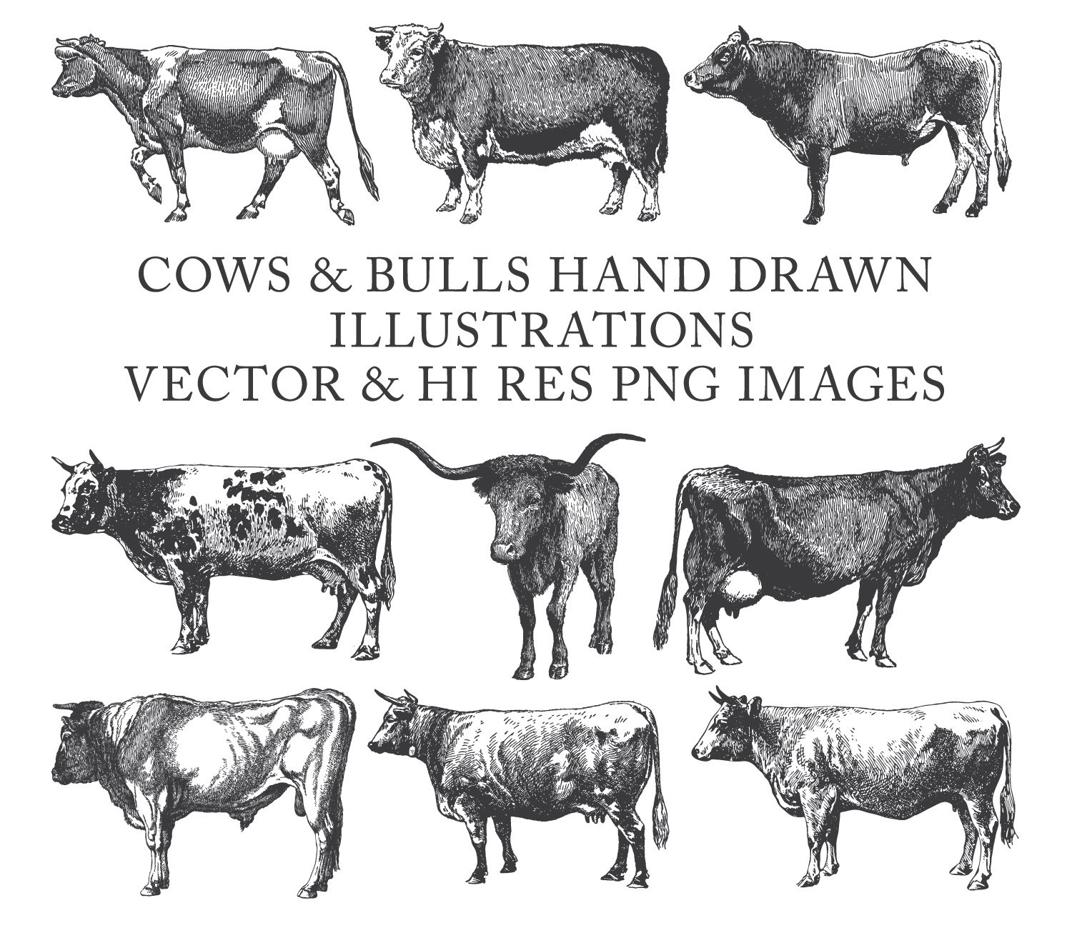Drawn bulls spain bull Cow Engraving Clipart is file