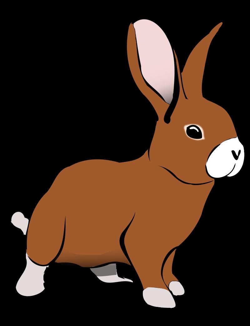Rabbit clipart Pictures Bunny clip pictures Clipartix