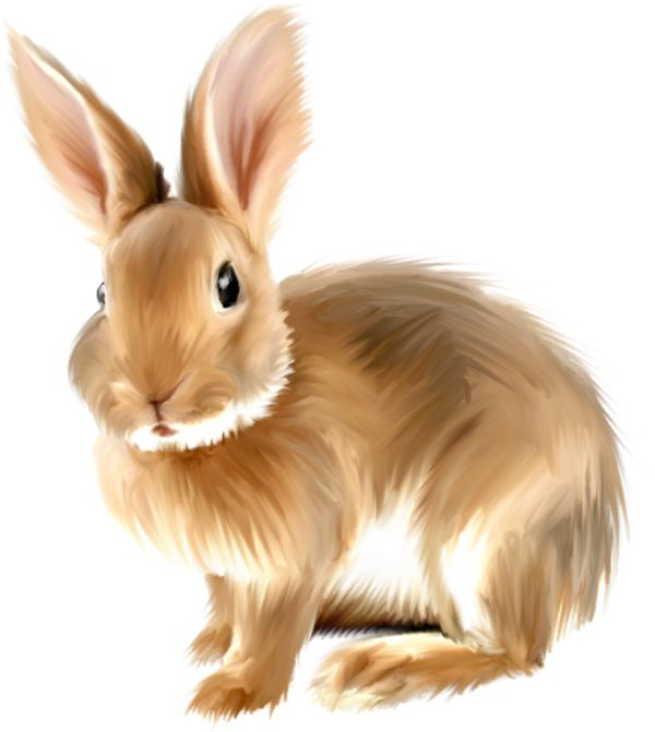 Rabbit clipart #5