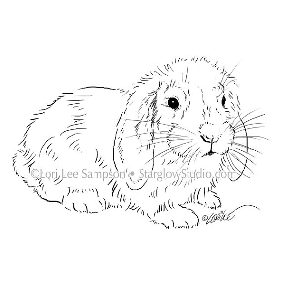 Drawn rabbit floppy eared bunny Rabbit Bunny Digital from Bunny