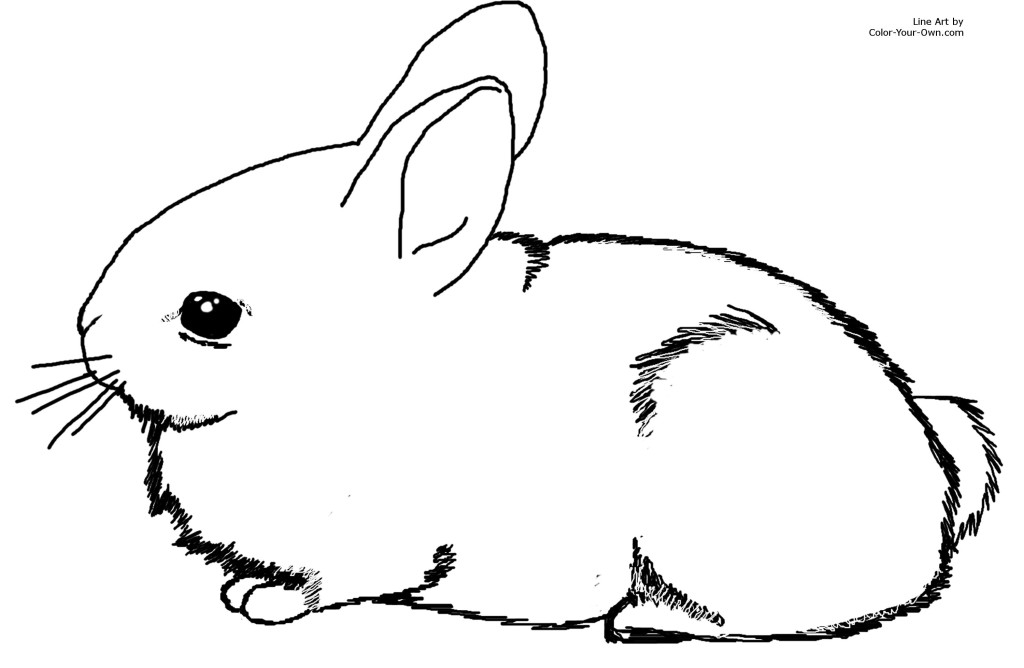 Drawn rabbit baby bunny Coloring Free Coloring Art Rabbit