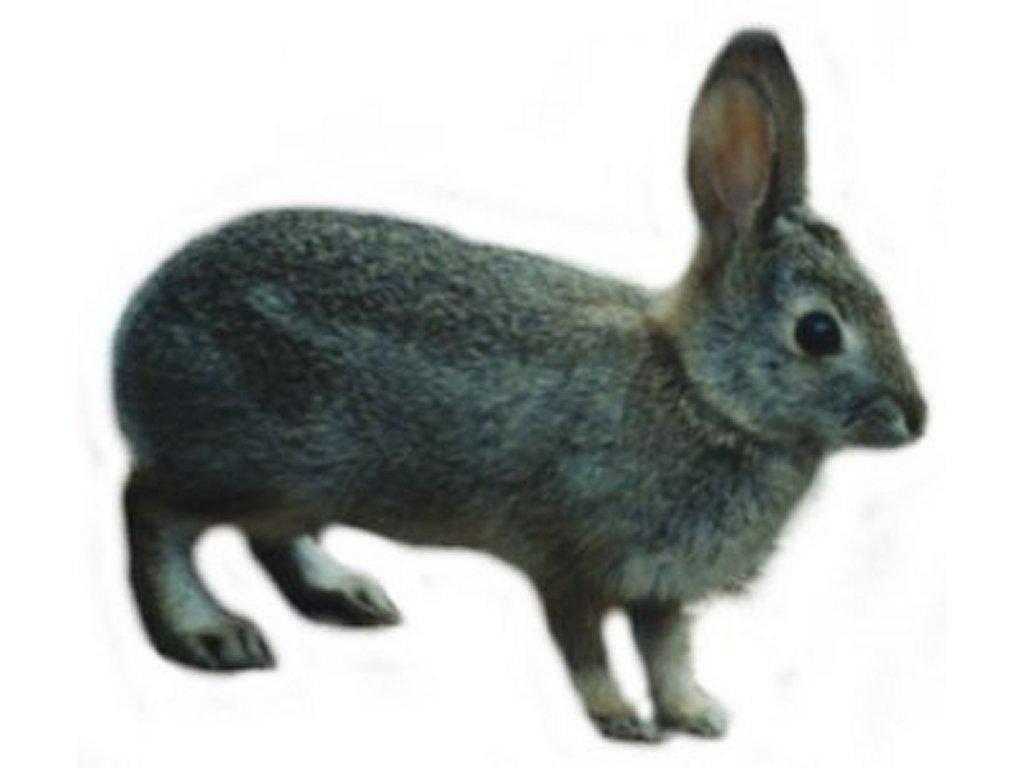 Rabbit clipart wild rabbit #9
