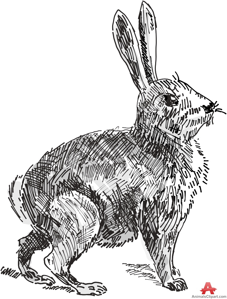 Drawn rabbid hand drawn Animals Clipart Gallery Rabbit by