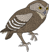 Burrowing Owl clipart Of M for Family Burrowing