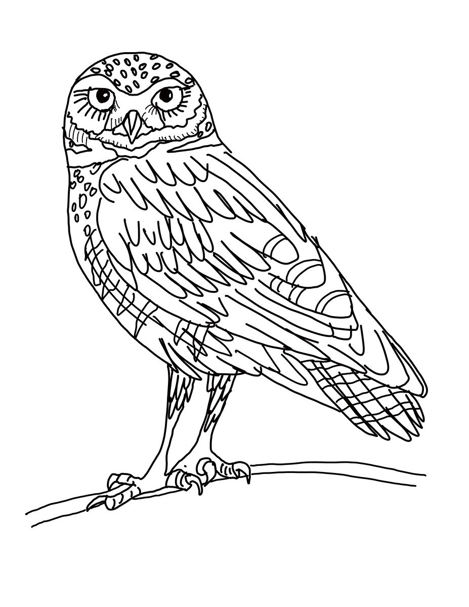 Barred Owl clipart burrowing owl Printable Free Owl Pages Owl