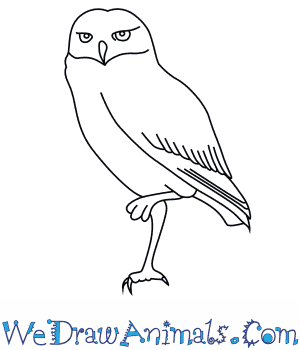 Burrowing Owl clipart Draw Burrowing How to a