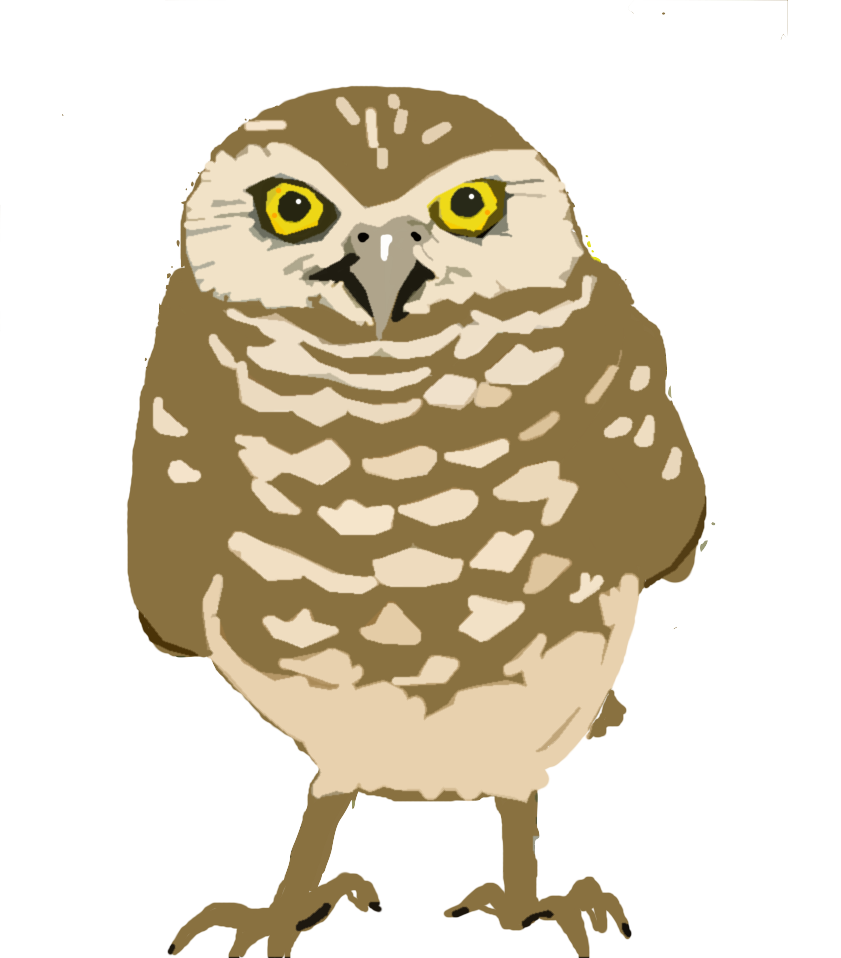 Burrowing Owl clipart Poet O for owl copy