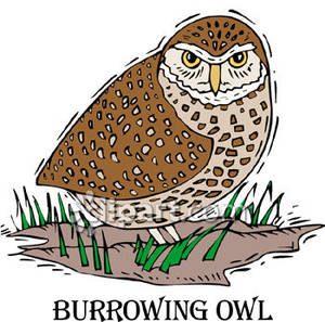Burrowing Owl clipart Free Free Picture Picture Owl