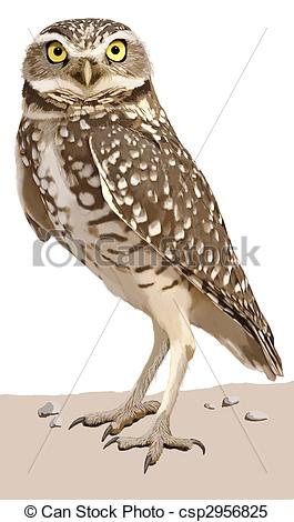 Burrowing Owl clipart Athene Stock of  Owl