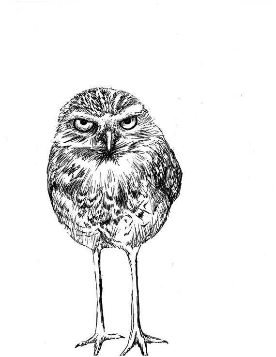 Burrowing Owl clipart To similar and Burrowing with