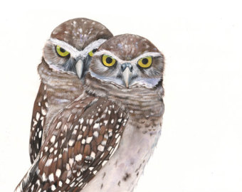 Barred Owl clipart burrowing owl Art Owl print Gouache owls