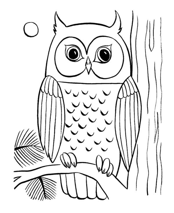 Color clipart owl Coloring Of Cute Two Pages