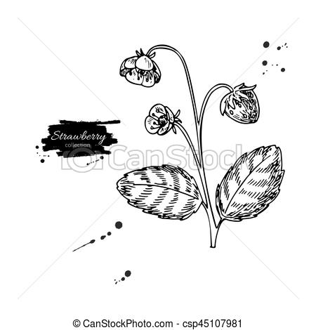 Drawn bush grass Vector csp45107981 plant drawn