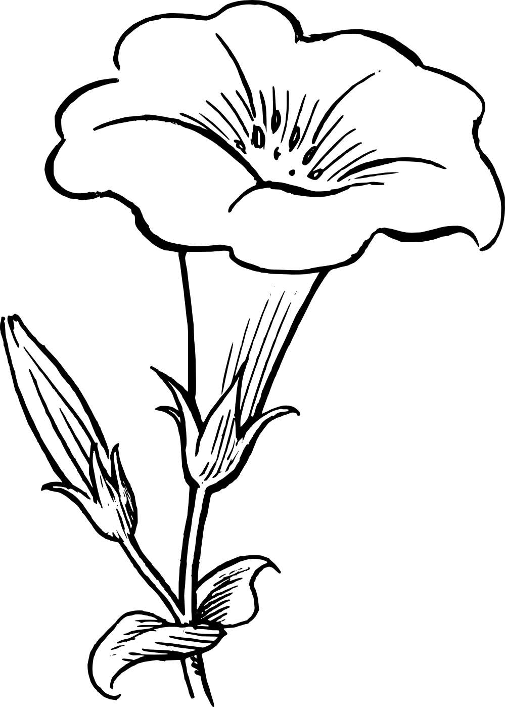 Bush clipart drawn Panda Clipart Clipart black%20and%20white%20flower%20drawing Black
