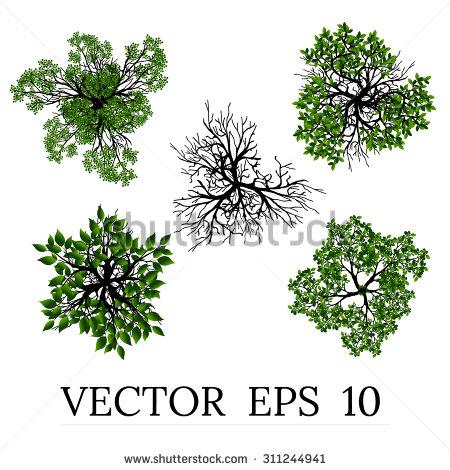 Bush clipart blackberry bush View Trees design Trees in