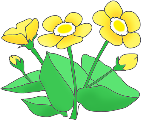 Buttercup clipart Drawings Download clipart Download Buttercup