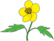 Buttercup clipart Kb Search Results Search