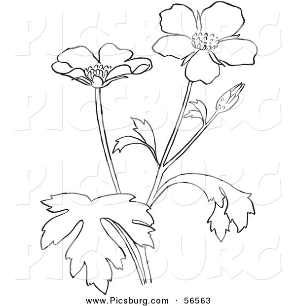 Buttercup clipart black and white Coloring of Clip Plant Flower