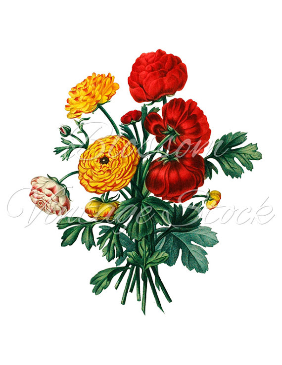 Buttercup clipart cartoon flower Bouquet  Red Botanical Red