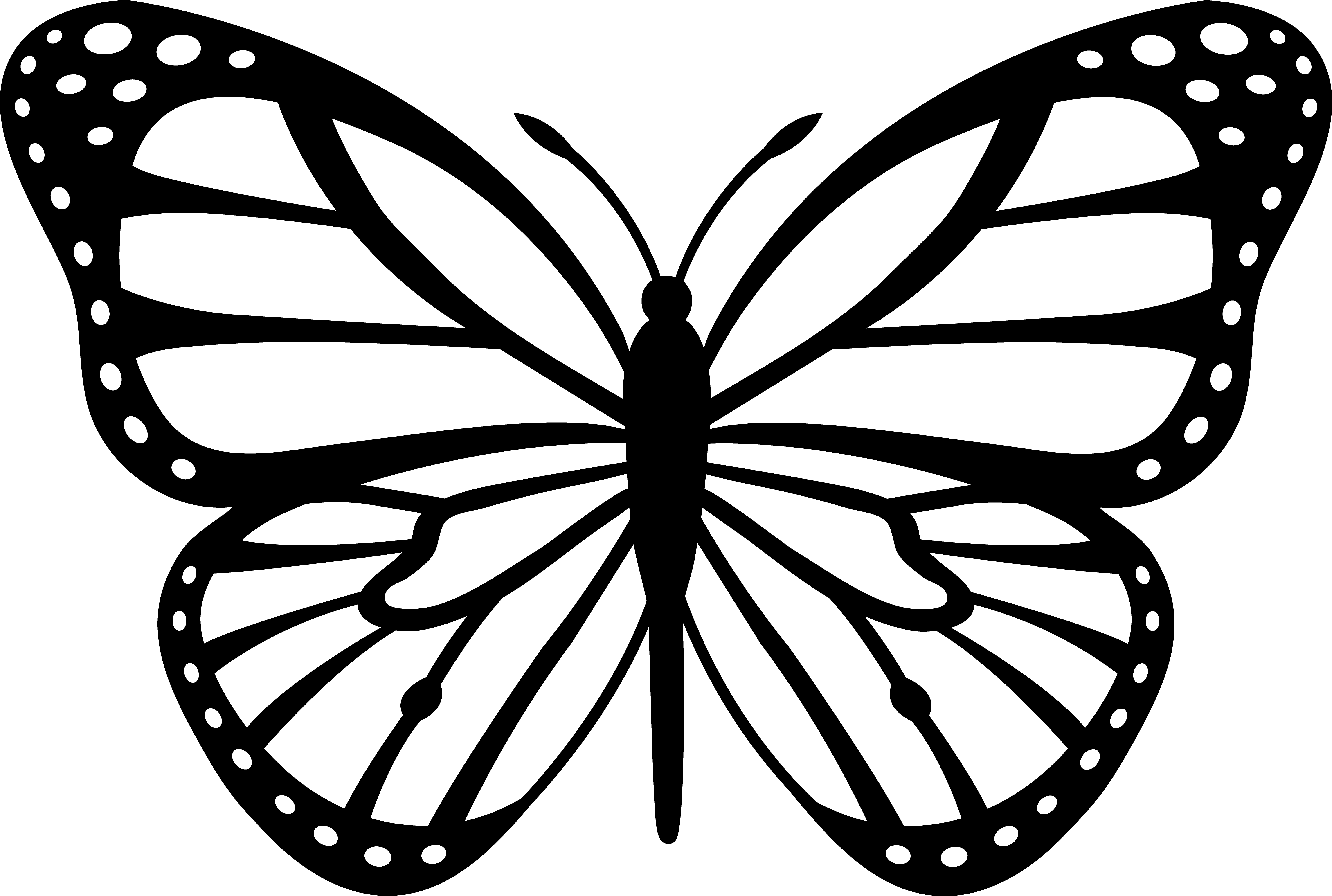 Drawn butterfly Art white Butterfly free and