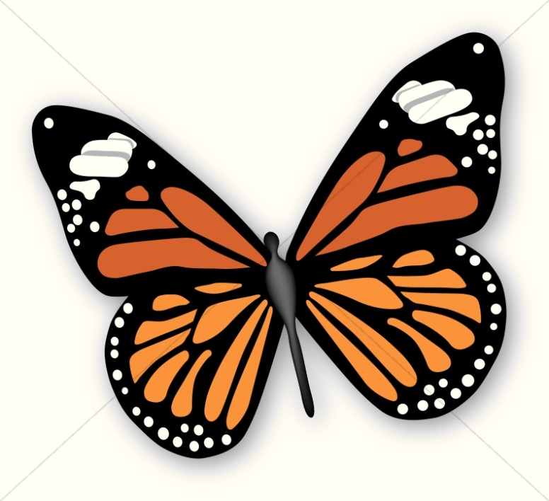 Butterfly clipart #12