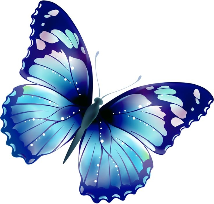 Butterfly clipart #5