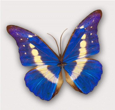 Butterfly clipart animated Free butterfly animated clipart collections