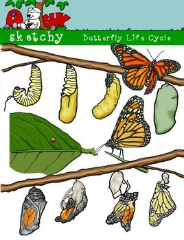 Caterpillar clipart butterfly cocoon / Butterfly Butterfly Caterpillar Cycle