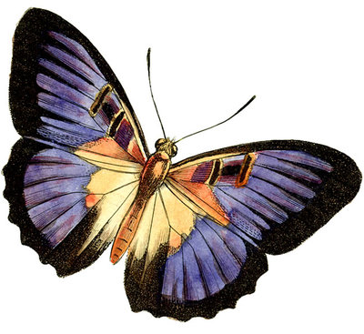 """Moth clipart antique Oldies"""" balked a I Simmons"""