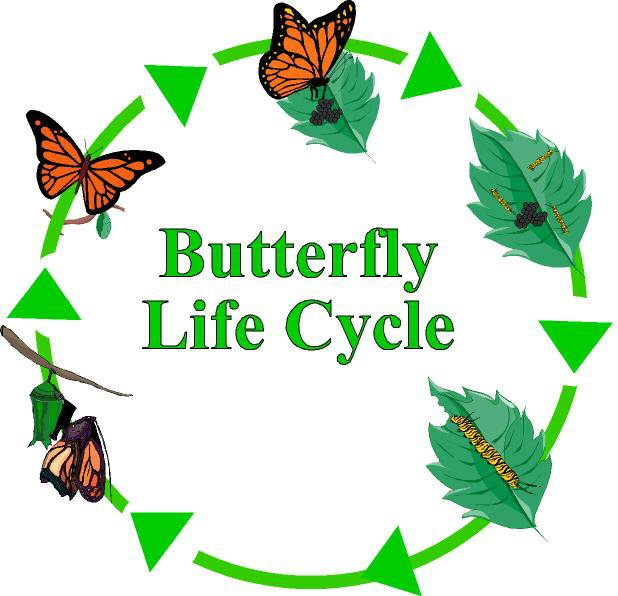 Butterfly clipart growth Of butterfly cycle a clipart