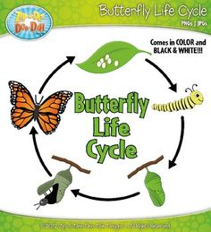 Butterfly clipart growth & Set Plant Cycling of