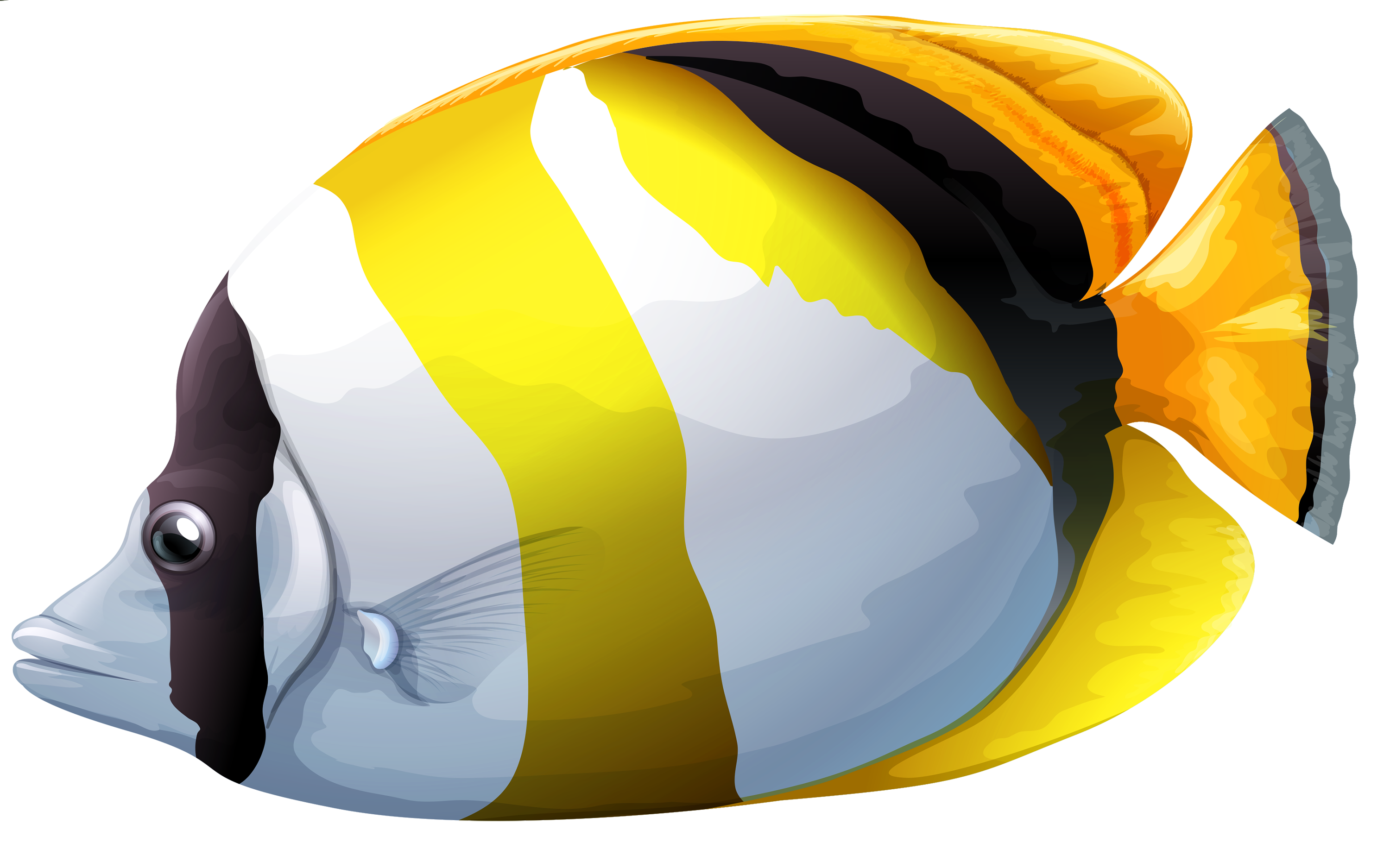 Butterflyfish clipart Fish Chaetodon PNG PNG Butterfly