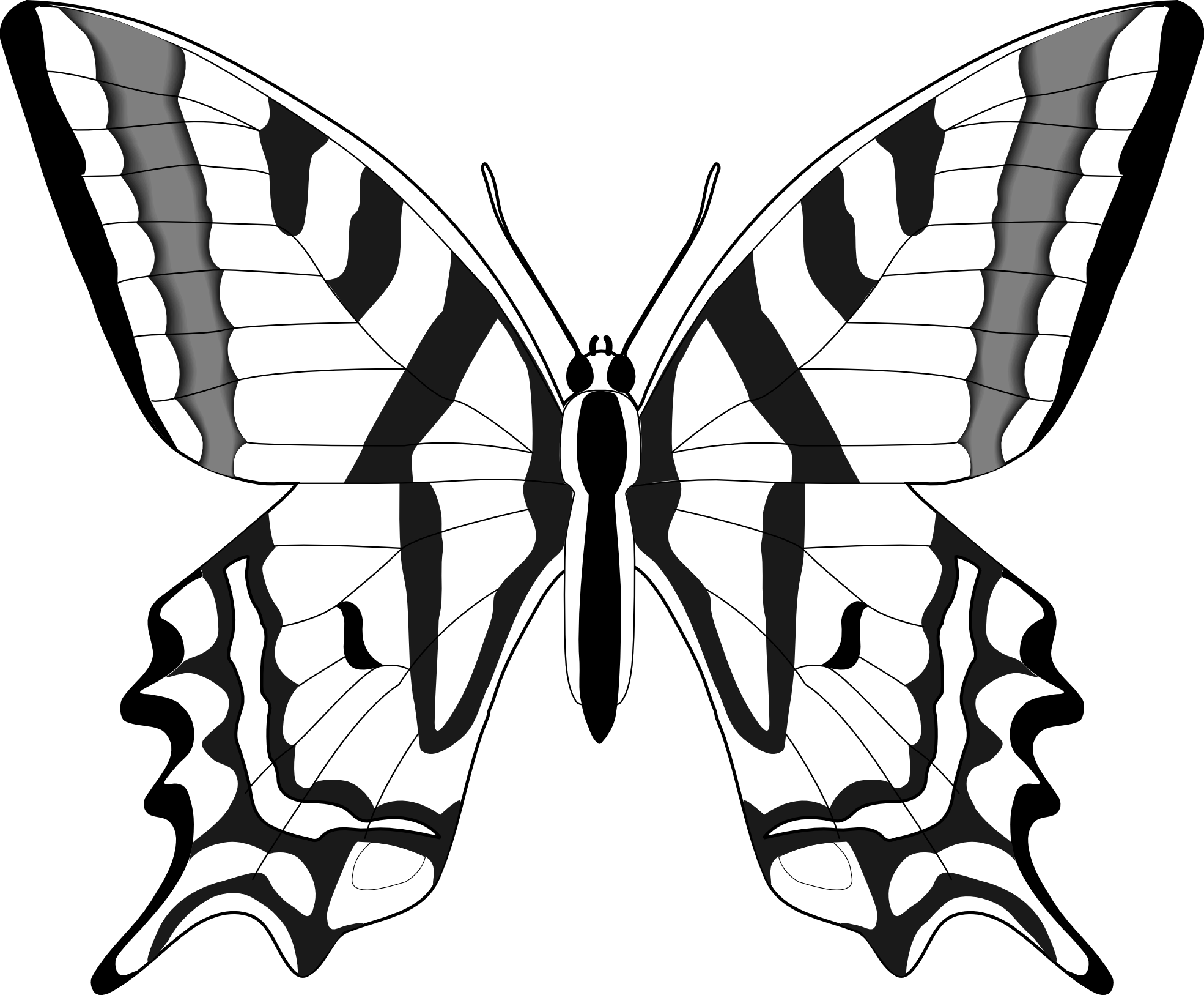 Drawn moth White butterfly%20clipart%20black%20and%20white  Butterfly Clipart