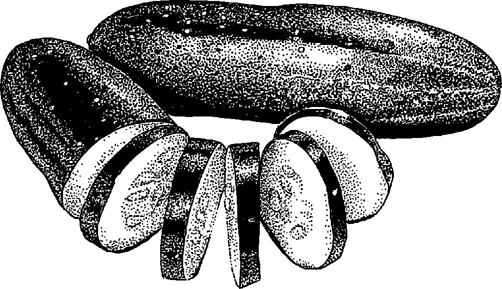 Black & White clipart cucumber « » « clipart Practica