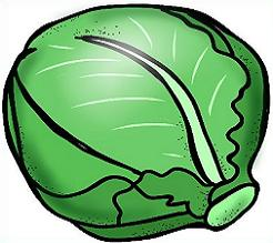 Cabbage clipart healthy food Cabbage Free Cabbage Clipart