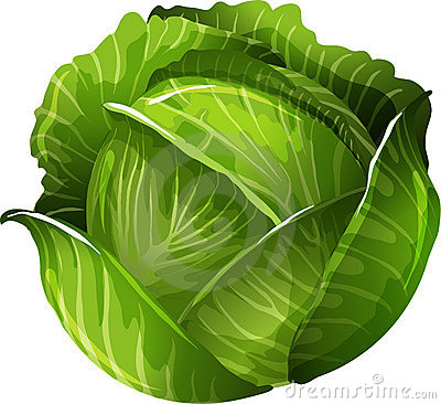 Cabbage clipart healthy food Cabbage Pages clipart for Kids