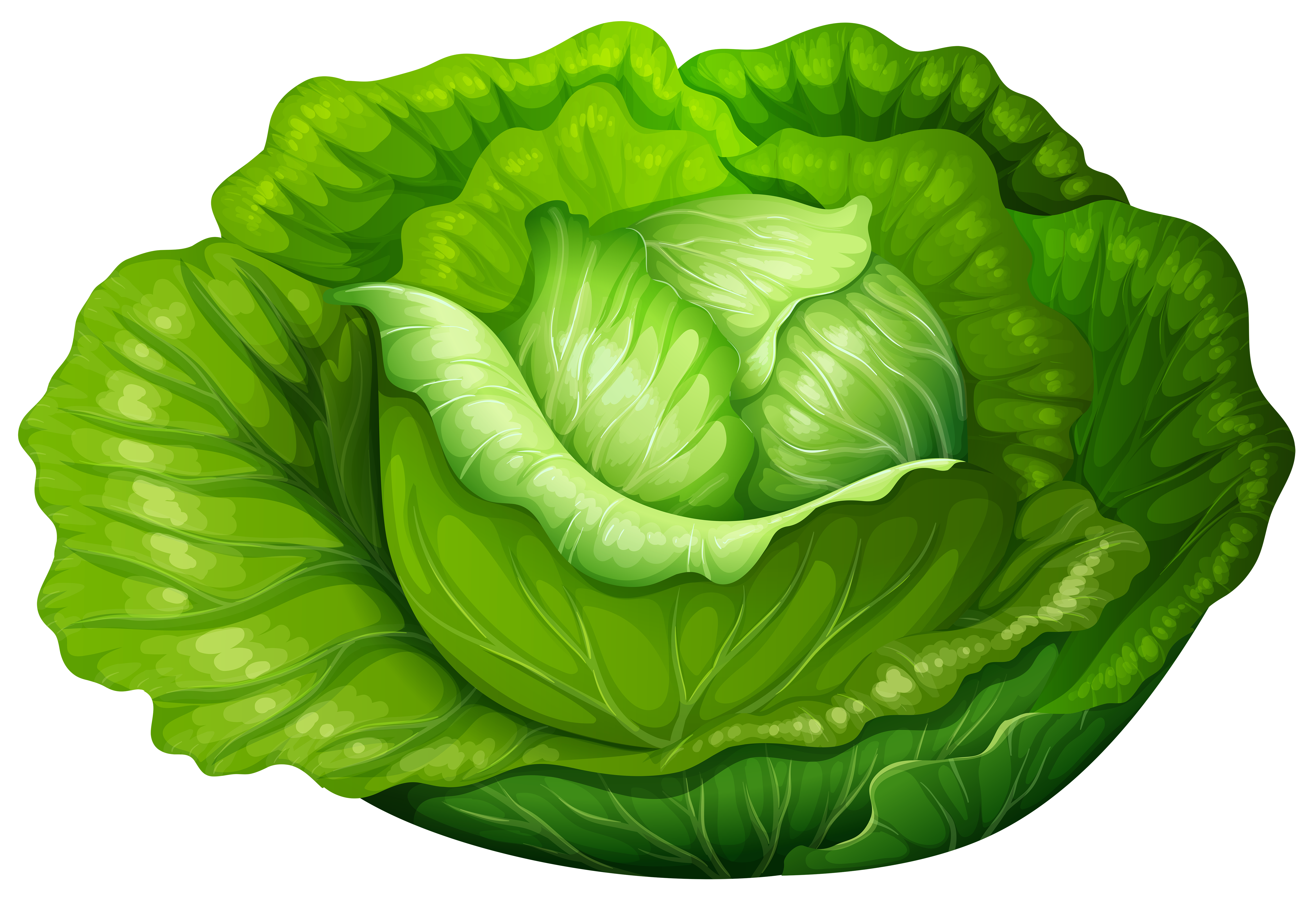 Cabbage clipart Collection clipart Cabbage Cabbage free