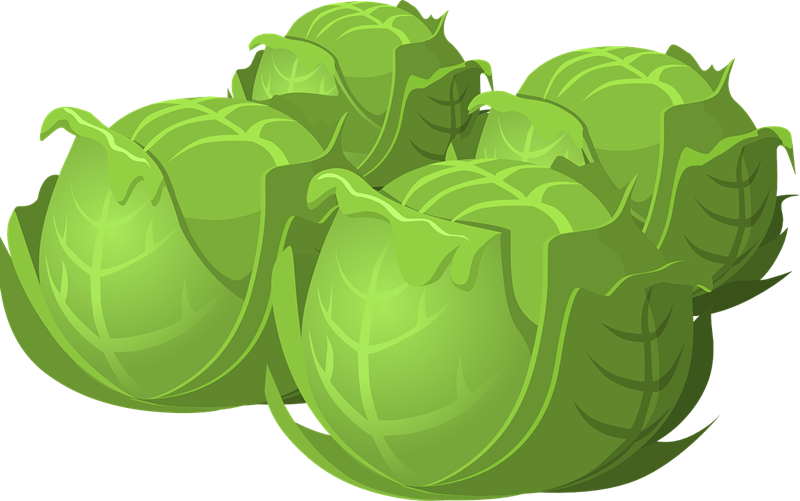 Cabbage clipart healthy food Cabbage4 Domain Free Cabbage Clip
