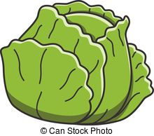 Cabbage clipart healthy food  Illustrations vector Cabbage 6