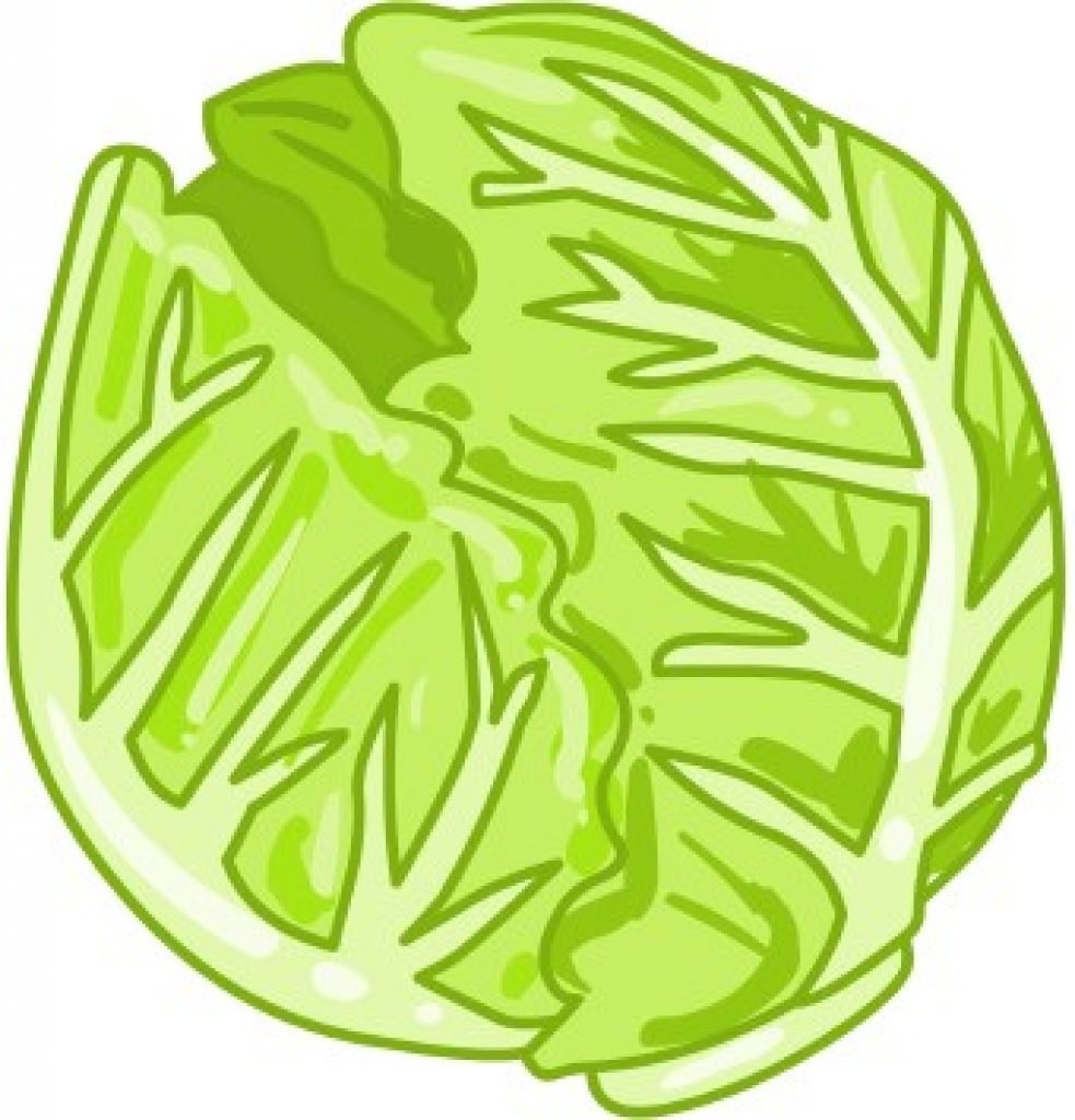 Cabbage clipart healthy food Cabbage art art photo clip