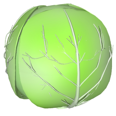 Cabbage clipart ball Org DownloadClipart art clip Cabbage