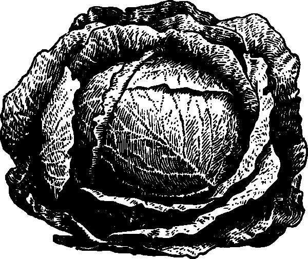 Cabbage clipart black and white Clip royalty  com com