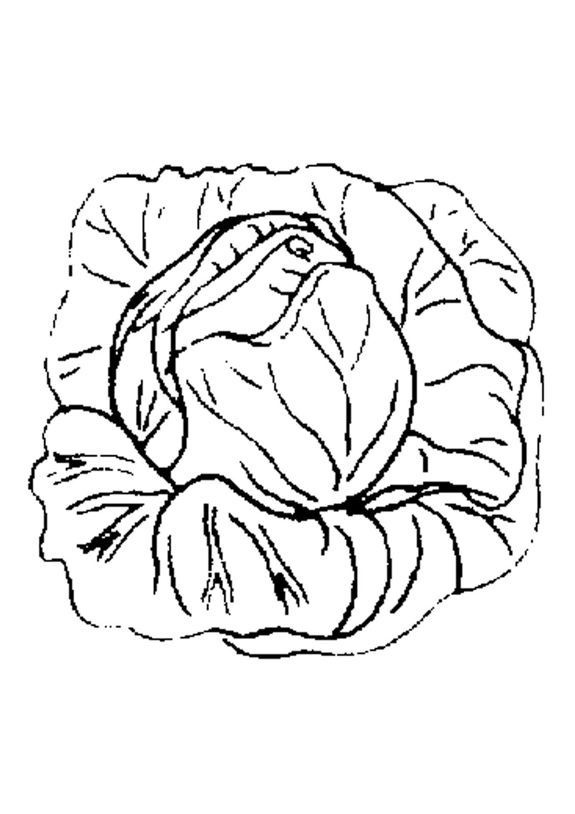 Cabbage clipart black and white Clipart White and vector white