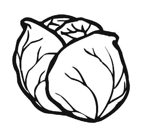 Cabbage clipart coloring 1 Cabbage Cabbage  pages