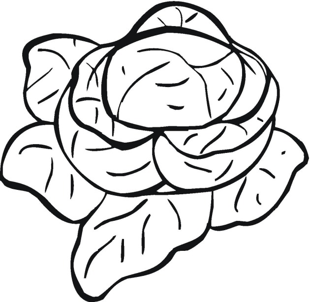 Cabbage clipart coloring Coloring Cabbage pages Cabbage