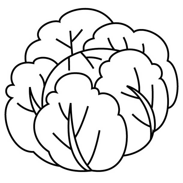 Cabbage clipart coloring Coloring Kale Coloring Printable Kids!