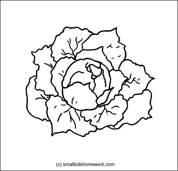 Cabbage clipart outline Outline 15 best Pictures Pinterest