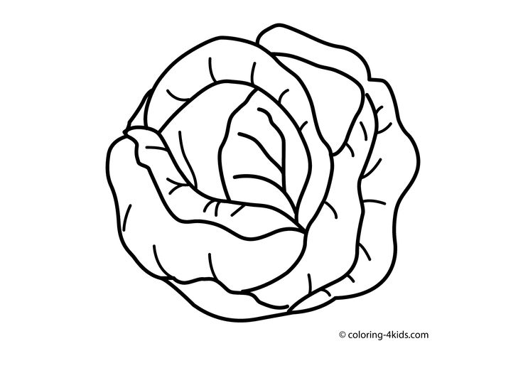 Cabbage clipart outline Vegetable best Food on Cabbage