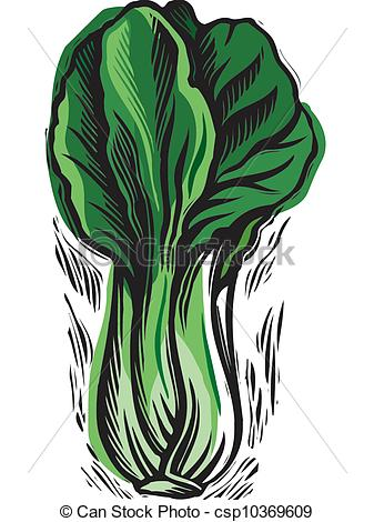 Cabbage clipart petchay Drawings drawing line Cabbage art